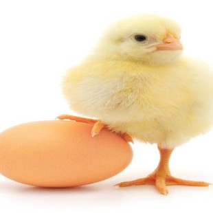 Chicken Adventure Tips And Tricks