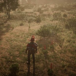 Where To Find Red Sage In Red Dead Online