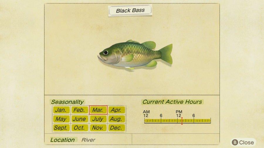 Black Bass Animal Crossing New Horizons
