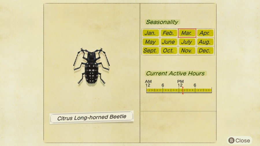Citrus Long Horned beetle Animal Crossing New Horizons