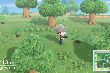 How To Grow Coconut Trees In Animal Crossing New Horizons