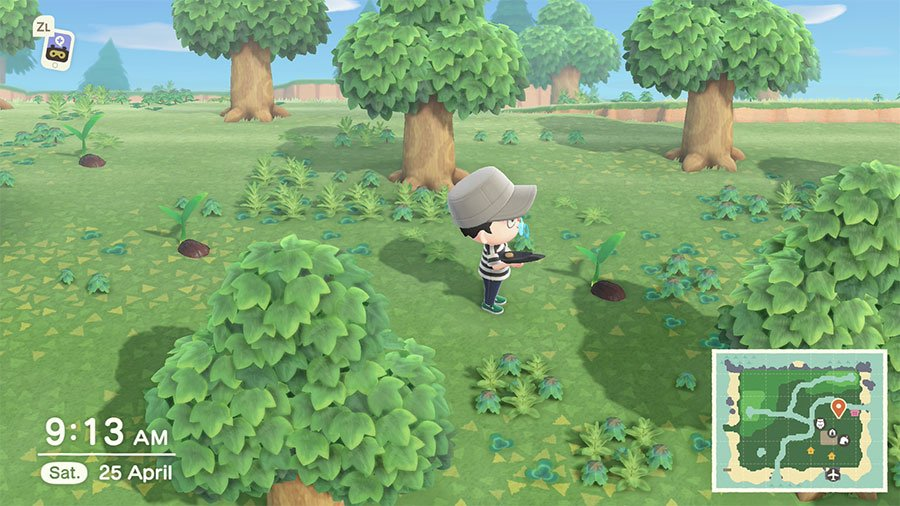 How To Grow Coconut Trees In Animal Crossing New Horizons ...