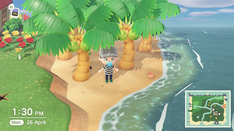 How To Grow Coconut Trees In New Horizons