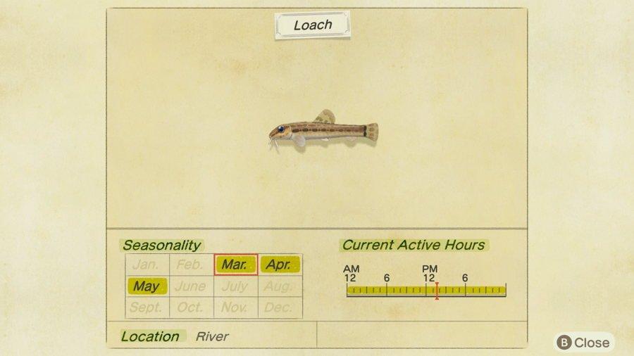 Loach Animal Crossing New Horizons