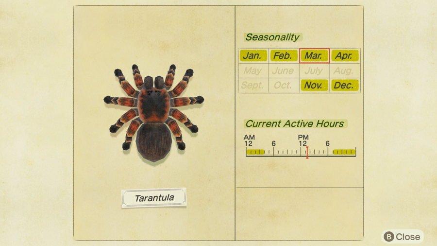 Tarantula Animal Crossing New Horizons