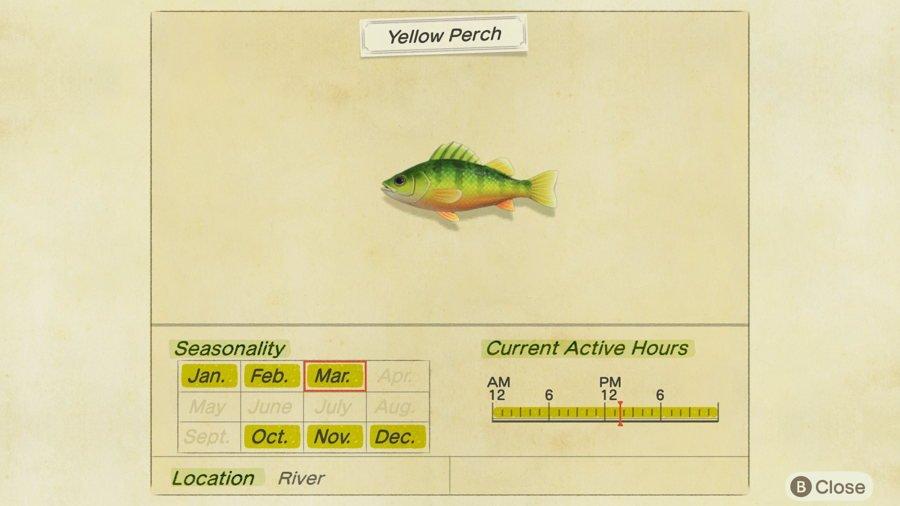 Yellow Perch Animal Crossing New Horizons